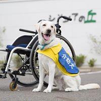 画像:社会福祉法人 日本介助犬協会